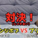 スポンジボブと対決する犬